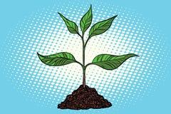 Groene spruit in de grond royalty-vrije illustratie