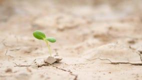 Groene Spruit in Dorre Landoppervlakte Zonder regen Het Conceptenachtergrond van het klimaatverandering Ecologische Probleem 4K t stock footage