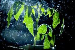Groene spruit met een rond nevel van water Stock Foto's