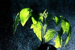 Groene spruit met een rond nevel van water Royalty-vrije Stock Foto