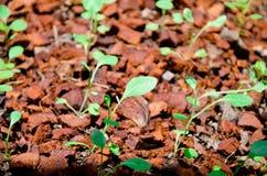 Groene spruit in perceel Stock Fotografie