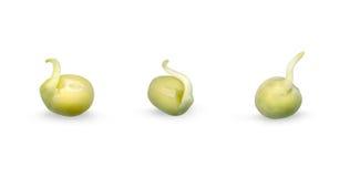 Groene spruiten Royalty-vrije Stock Afbeelding