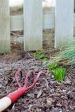 Groene spruiten dichtbij omheining Stock Afbeeldingen