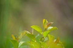 Groene spruiten op de zonnige gazontuin Royalty-vrije Stock Foto's