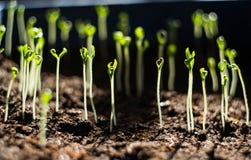 Groene spruitenonderbreking door de grond Royalty-vrije Stock Foto