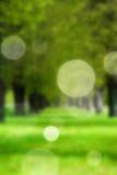 Groene steeg in het vage park Stock Afbeeldingen
