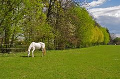 Groene steeg met weide en weidend paard stock foto