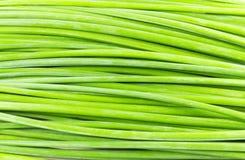 Groene steel Stock Foto's