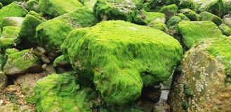 Groene stenen stock fotografie