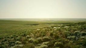 Groene steppe bij zonnige dag stock videobeelden