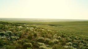 Groene steppe bij zonnige dag stock video