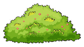Groene struik stock illustratie