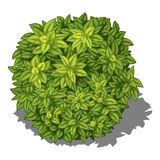 Groene struik in isometrisch perspectief, vectorbeeld op witte achtergrond royalty-vrije illustratie