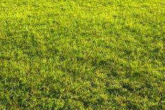 Groene struik met witte bloem Groene bladerenmuur Stock Afbeelding