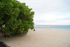 Groene struik op een zandig strand op een bewolkte dag Stock Foto's