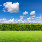 Groene struik op hemelachtergrond stock fotografie