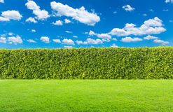 Groene struik op hemelachtergrond stock foto's