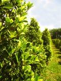 Groene struik in tuin stock foto's