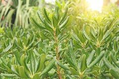 Groene Struiken, Groene Achtergrond van Bladeren Royalty-vrije Stock Afbeeldingen