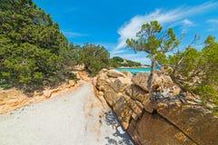 Groene struiken in Capriccioli-strand royalty-vrije stock afbeelding