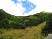 Groene struiken en blauwe hemel in Fagaras, Transsylvania, Roemenië stock afbeeldingen