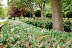 Groene struiken in het park royalty-vrije stock foto's