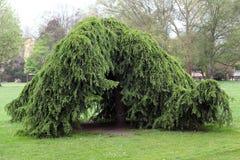 Groene struiken in tuin stock afbeeldingen