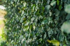Groene struiken voor het modelleren stock foto's
