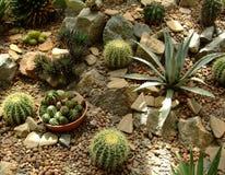Groene Succulent en cactus in bladeren in botanische tuin stock foto