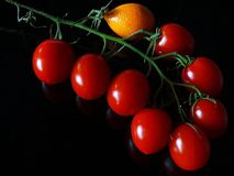 Groene Tak met Rode Tomaten en Sinaasappel royalty-vrije stock foto