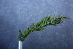 Groene tak op grijze concrete muur Royalty-vrije Stock Foto