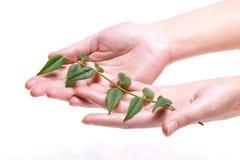 Groene Tak in Palm Stock Foto's