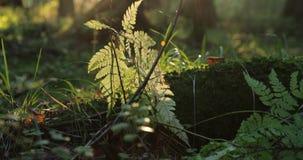 Groene takken en installaties evenals andere vegetatie in het bos tijdens de dag stock video