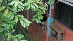 Groene takken met bladeren in de regen tegen een vaag huis stock video