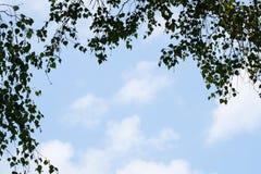 Groene takken op achtergrond van blauwe hemel Stock Foto