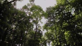 Groene takken van bomen in het stadspark in de zomer stock footage