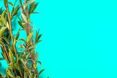Groene takken van de lentewilg op groene achtergrond Exemplaarruimte op het recht voor uw tekst stock fotografie