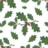 Groene takken van eik met eikels en bladeren naadloos Op witte achtergrond Illustratie vector illustratie