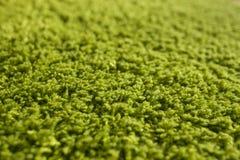 Groene tapijttextuur Stock Foto