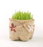 Groene tarwe in kop Stock Foto