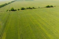 Groene tarwe op het gebied, hoogste mening met een hommel Textuur van whea royalty-vrije stock fotografie
