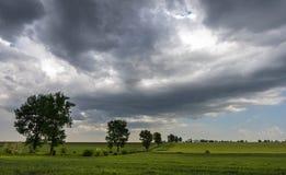 Groene tarwegebied en onweerswolken royalty-vrije stock afbeeldingen
