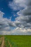Groene tarwegebied en onweerswolken royalty-vrije stock afbeelding