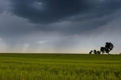 groene tarwegebied en onweerswolken in de de zomerdag stock afbeelding