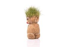 Groene Teddy Stock Foto's