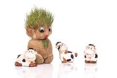 Groene Teddy Stock Foto