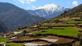 Groene terrassen bij de voet van de sneeuwberg royalty-vrije stock fotografie