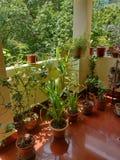 Groene terrastuin in zonlicht royalty-vrije stock foto