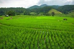 Groene terrasvormig riced gebied Royalty-vrije Stock Foto's