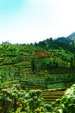 Groene terrasvormige gebiedsaanplanting in Dieng-plateau Java, Indonesië royalty-vrije stock afbeelding
